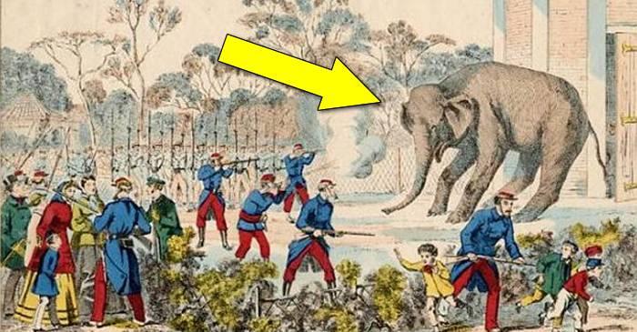 Anul în care francezii au mâncat șobolani, câini, pisici și o grădină zoologică