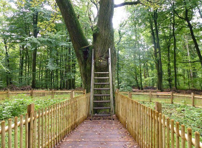 Stejarul Mirelui
