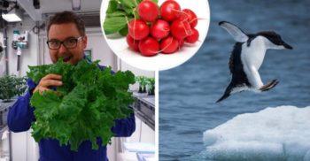 În Antarctica a fost Ziua Recoltei – 18 castraveți, 70 de ridichi și ceva salată