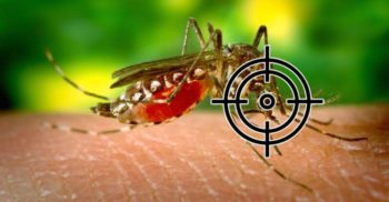 Țânțarii ne urmăresc și învață cum să ne învingă