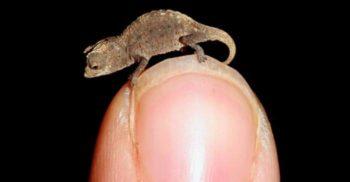 10 campionii minusculi ai naturii Cele mai mici animale din lume FEATURED_compressed