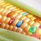 7 feluri de mâncare uimitoare din viitor, datorate tehnologiei avansate featured_compressed
