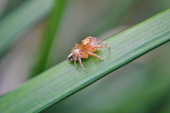 Cele mai mici animale - Paianjen