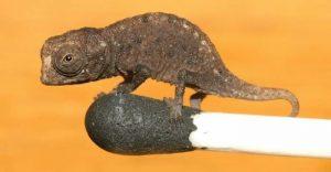 Cele mai mici animale - cover