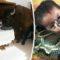 Cotețul din sufragerie 10 animale de companie bizare, care au făcut istorie featured_compressed