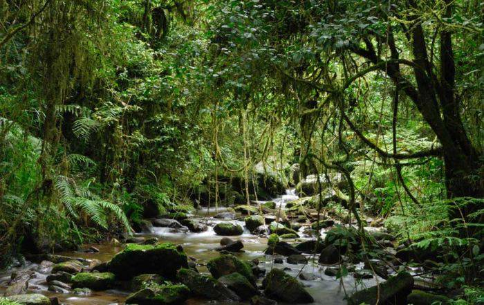 Madagascar - Parcul National Ranomafana