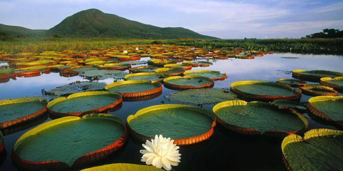 Minuni ale naturii - Pantanal