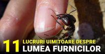 11 lucruri uimitoare care te vor face să admiri furnicile FACEBOOK_compressed