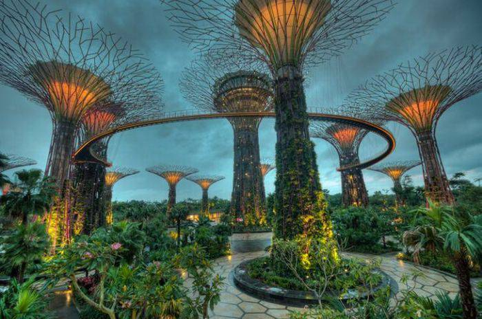 Fotografii stranii - Super-arbori