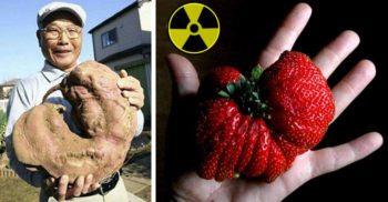Grădinăritul ca la Cernobîl - Plantele-mutant crescute cu radiații featured_compressed