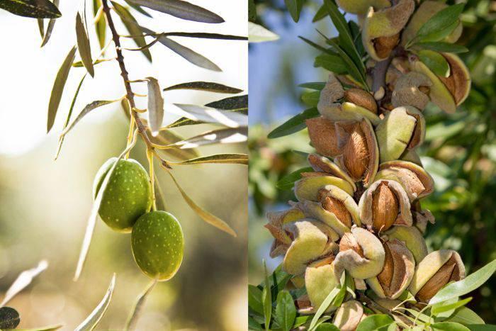Plante comestibile - Migdale