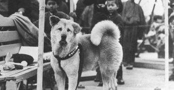 Povestea extraordinară a lui Hachiko, cel mai loial câine din lume featured_compressed