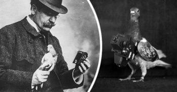 Povestea fascinantă a farmacistului care a creat primii porumbei-fotografi din lume featured_compressed