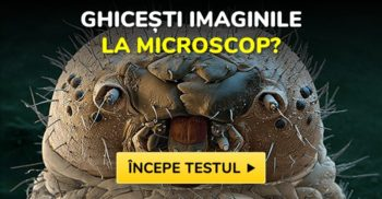 ghicesti imaginile la micriscop featured_compressed