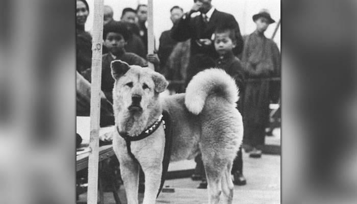 Hachiko, cel mai loial câine din lume