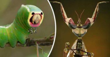 5 insecte stranii care par să provină dintr-o lume extraterestră FEATURED_compressed