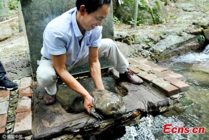 Creaturi ciudate - Salamandra chinezeasca