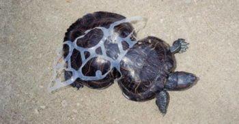Sufocați de plastic - 10 imagini dureroase ale poluării din apele lumii featured_compressed