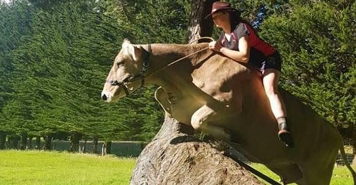 VIDEO Nu și-a permis un cal de curse, dar a improvizat călărește vaca familiei FEATURED_compressed
