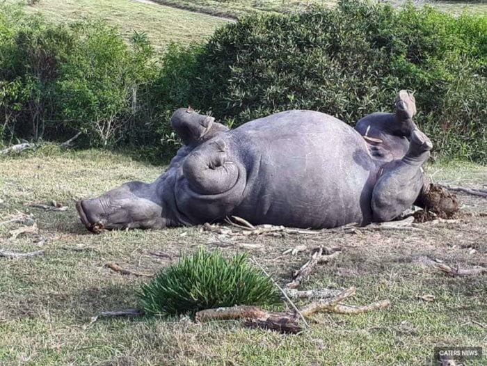 Rinocer Bella 01
