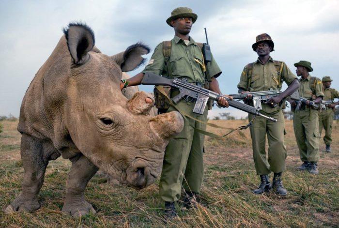 Rinoceri