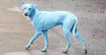 Se întâmplă în Mumbai, India – Câinii maidanezi au devenit albaștri