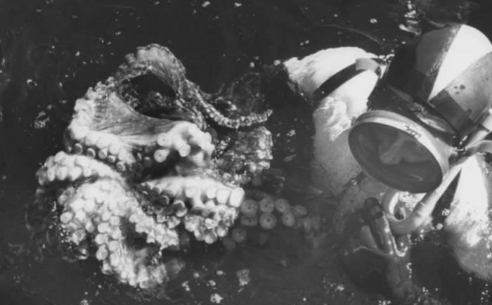 luptele cu caracatițe