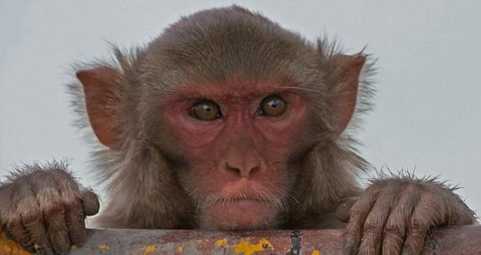 Locuri sumbre - Maimuta