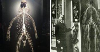 O femeie de serviciu și-a donat corpul științei, iar rezultatul este ceva ieșit din comun