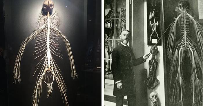 O femeie de serviciu și-a donat corpul științei, iar rezultatul este ceva incredibil FEATURED_compressed