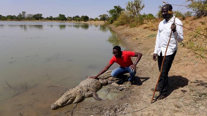 crocodili_04