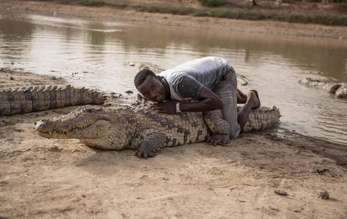 crocodili_05