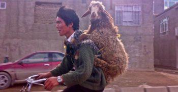 7 curiozități despre capre, primele animale domesticite