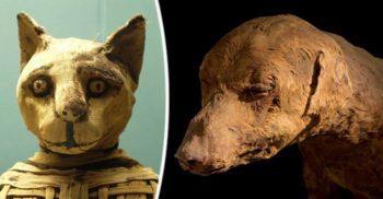 Misterele milioanelor de animale mumificate din Egiptul Antic featured_compressed