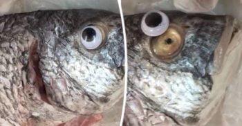 """VIDEO Afacerea miroase dubios Pește vechi, """"împrospătat"""" cu ochi de plastic featured_compressed"""