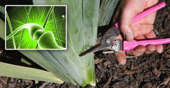 VIDEO Fenomenul fascinant care are loc când o plantă este rănită FEATURED_compressed
