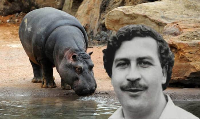 Pablo Escobar pablo_escobar_06