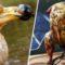 6 specii de animale care au dispărut pentru că oamenii le-au mâncat FEATURE_compressed