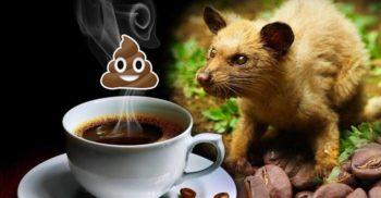 """7 curiozități despre cafea, """"licoarea magică"""" de zi cu zi"""