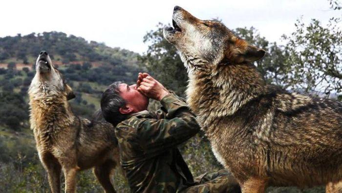 Crescut de lupi 01