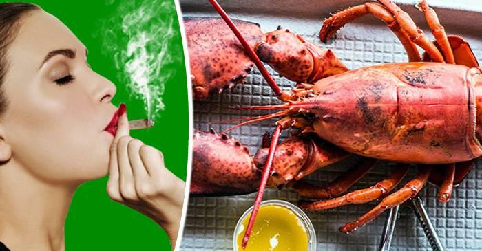 Un restaurant tratează homarii cu fum de canabis înainte de a-i fierbe FEATURED.fw_compressed