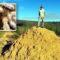"""""""Megaorașul"""" termitelor din Brazilia, vechi de 4000 de ani și vizibil din spațiu featured_compressed"""