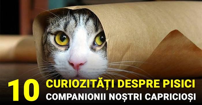 10 curiozități despre pisici, companionii noștri capricioși 2_comp