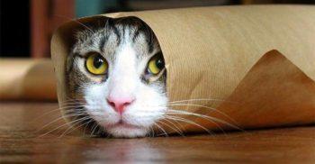 10 curiozități despre pisici, companionii noștri capricioși