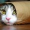 10 curiozități despre pisici, companionii noștri capricioși featured_comp