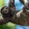 5 curiozități despre leneși, experți în trândăvitul în junglă featured_compressed