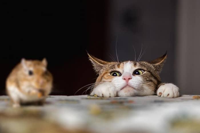 Curiozitati despre pisici 02