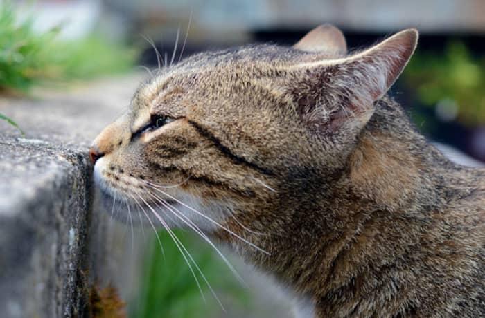 Curiozitati despre pisici 04