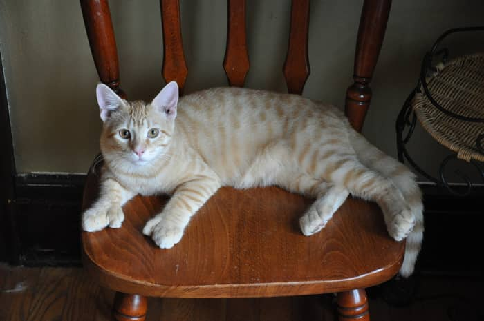 Curiozitati despre pisici 06
