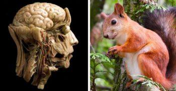 Un bărbat a murit după ce a mâncat creier de veveriță